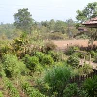 Amazing Laos: Bolaven Plateau